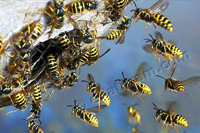 wasp-epathram