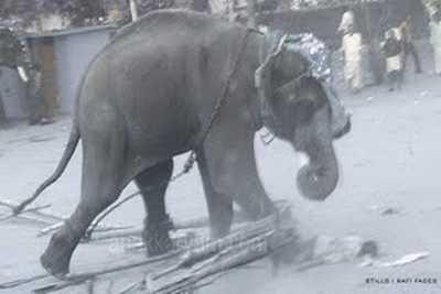 rafi-chettuwa-elephant-killing-mahout-epathram