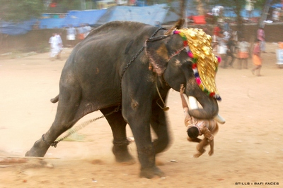 rafi-elephant-photo-epathram
