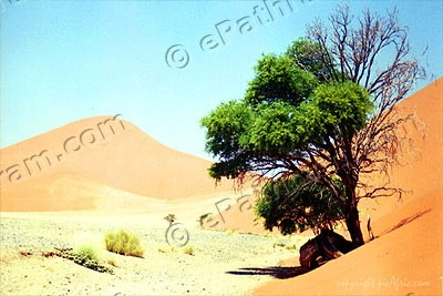 tree-in-desert-epathram