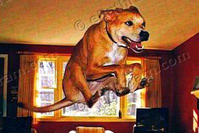 pets-dog-ePathram