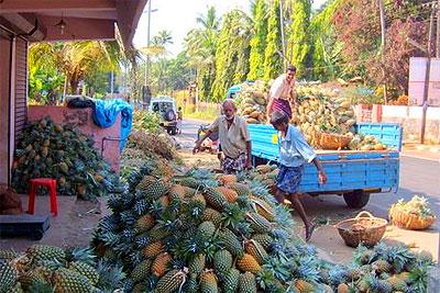vazhakulam-pineapple-market-epathram