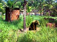 bear-in-kerala-epathram