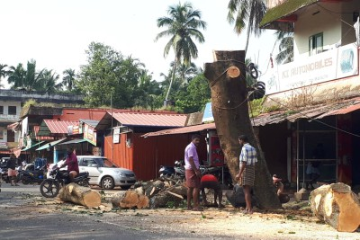 cutting-tree-on-pattambi-road-ePathram