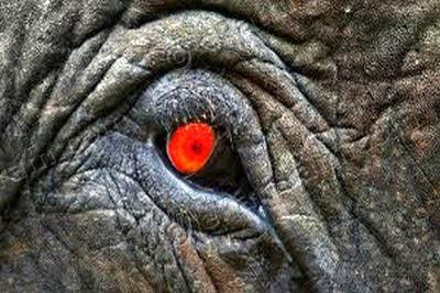 elephant-eyes-epathram