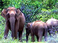 elephant-group-kerala-epathram