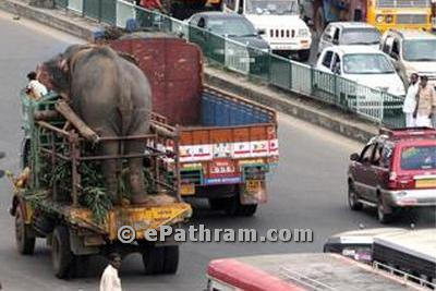 elephant-on-lorry-epathram