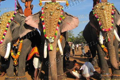 heavy-temperature-restriction-for-elephant-in-kerala-festivals-ePathram