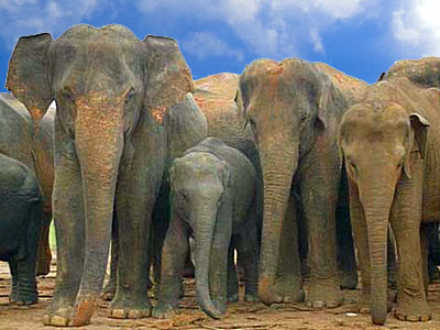 elephant-epathram