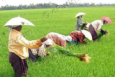 kerala-farmer-epathram