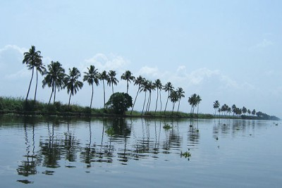 vembanadu-kayal-lake-soon-becomes-a-marshy-land-ePathram