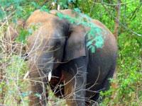 wild-elephant-kerala-epathram