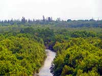 sunderbans-mangroves