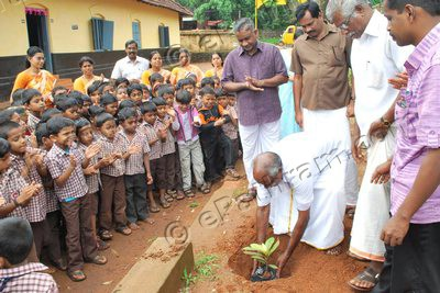 planting-mangosteen-epathram
