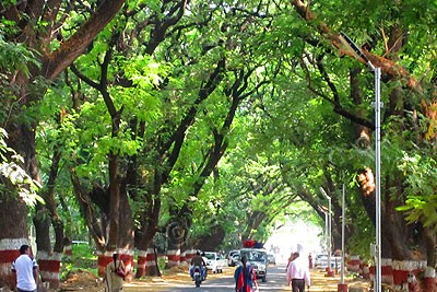 trees-mumbai-epathram
