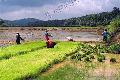 kerala-wetlands-epathram