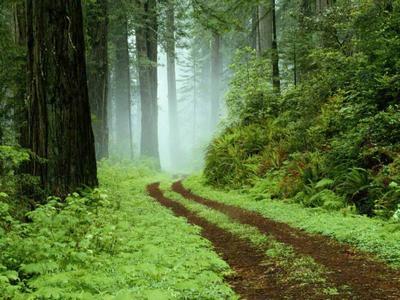 Forest-epathram