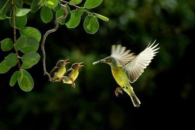 birds-epathram