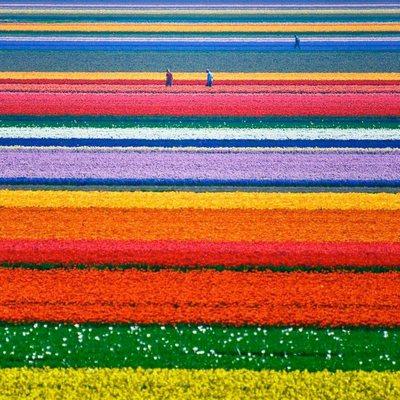 tulip garden-epathram
