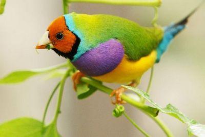 bird-epathram