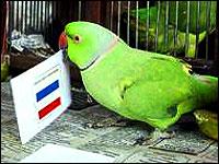 mani-parrot-singapore-epathram
