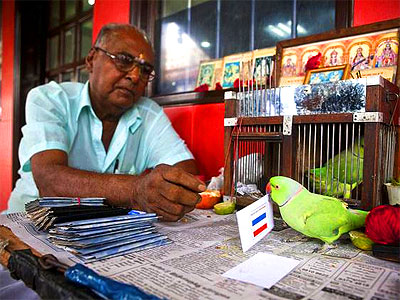 muniyappan-mani-parakeet-fortune-teller-epathram