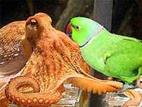paul-octopus-mani-parakeet-epathram