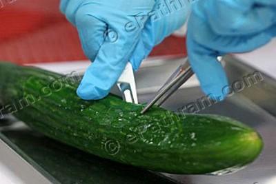 e-coli-cucumber-epathram