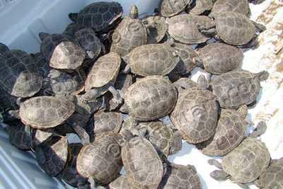 turtles-epathram