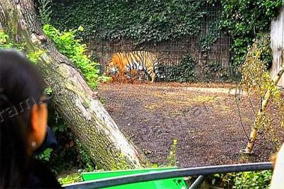 tiger-epathram